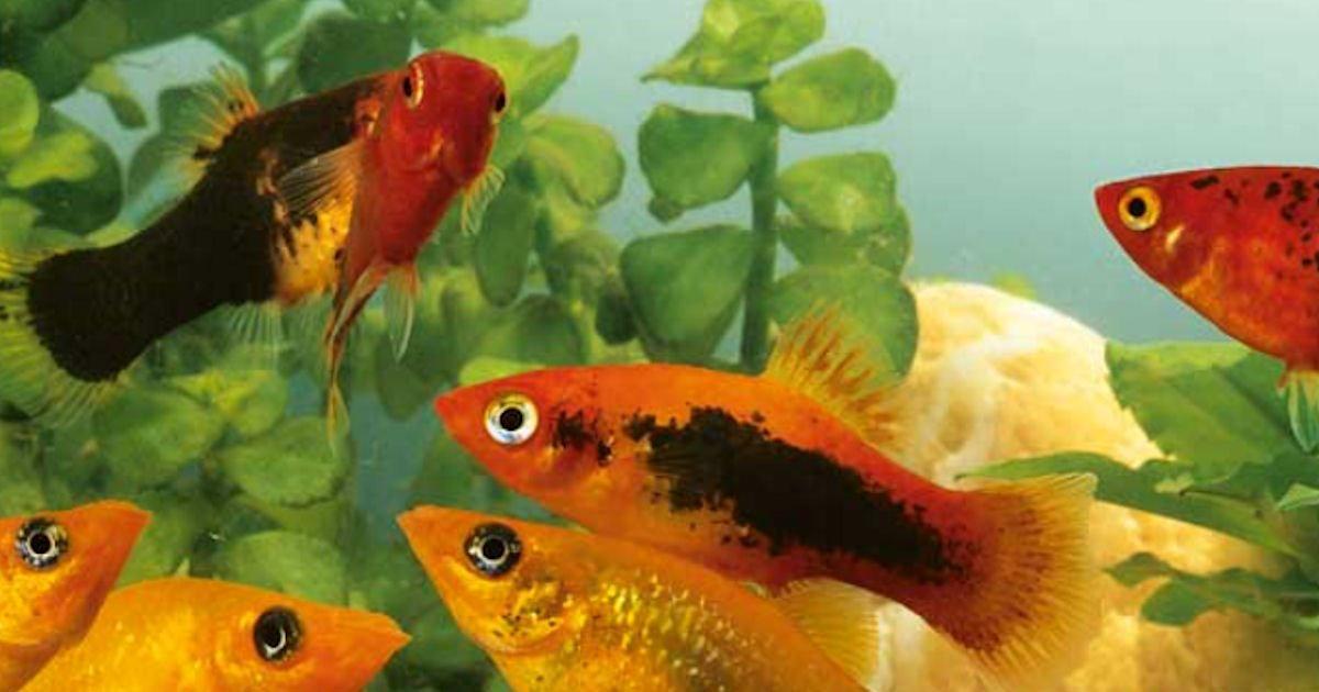 Free Aquarium Munster Dr. Bassleer BIOFISH Food