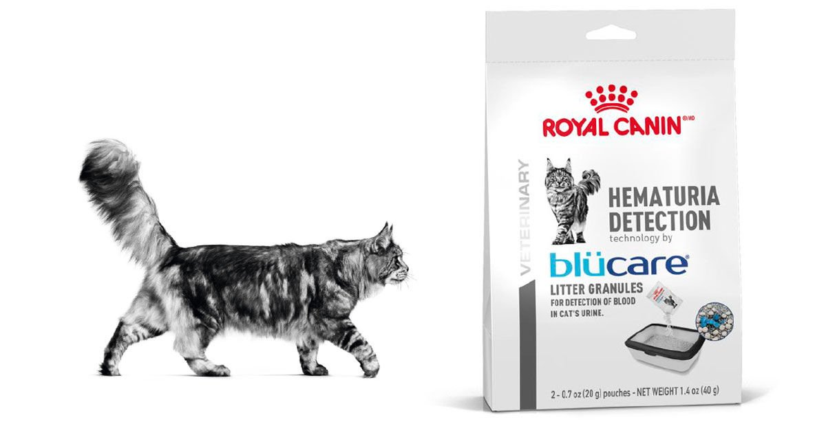 Free Sample of Royal Canin Hematuria Detection Cat Food
