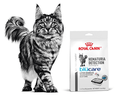 FREE Royal Canin Hematuria Detection Sample