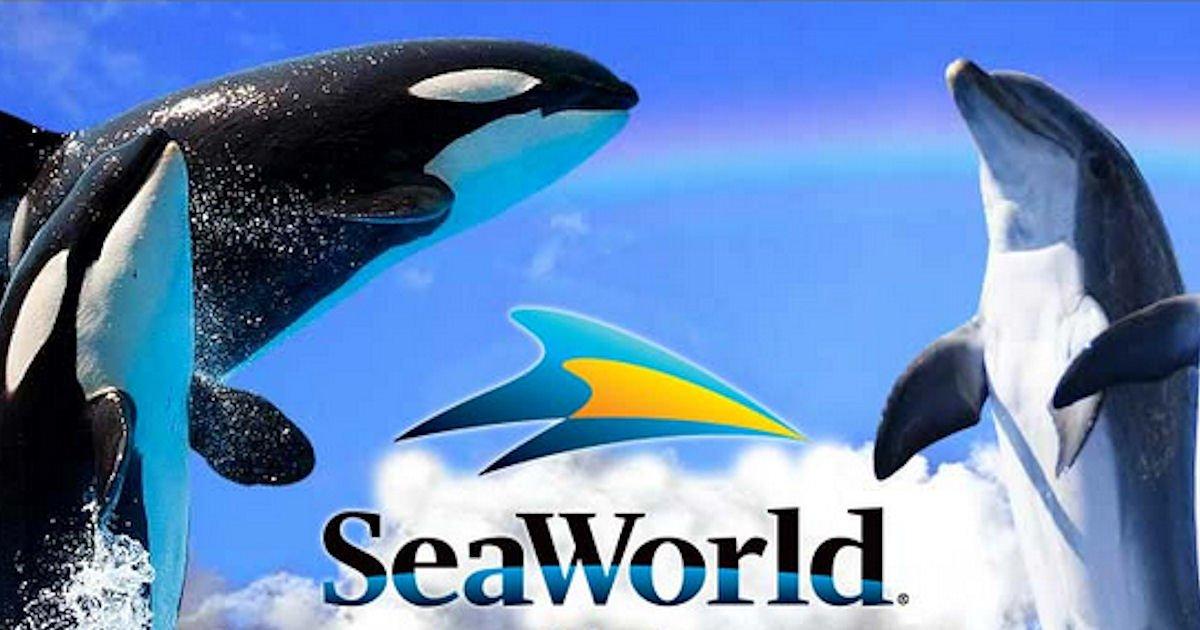 Free Seaworld Teacher Card